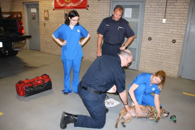 Fairfield Fire Lieutenant Bill Tuttle gets a pulse from a dog under the direction of Southport Vet Head Technician Lauren Haney.