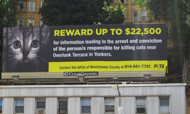 The total, which is displayed in large yellow font next to a picture of a forlorn kitten behind bars, includes donations from PETA and other organizations.