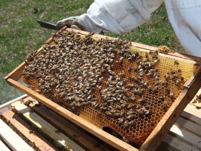 The Bedford Historical Society and the Bedford Free Library will teach the ins and outs of honeybees and beeswax candle making.