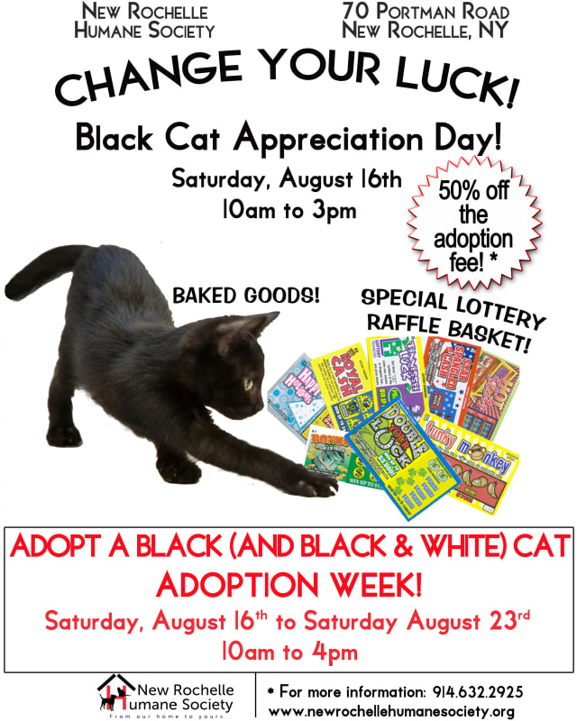 Adopt a black or black-and-white cat in honor of Black Cat Appreciation Day.