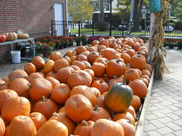There are several Halloween-themed activities happening in Chappaqua this weekend.