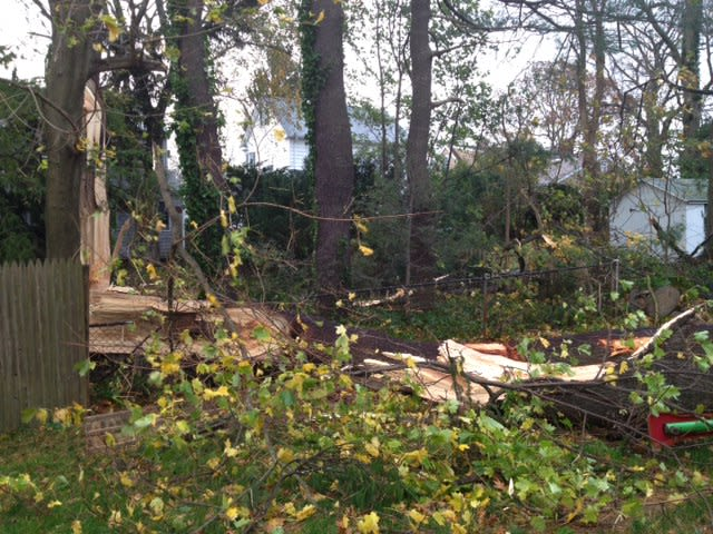 This tree fell into a yard on Gower Road in New Canaan. The town is beginning to recover from Hurricane Sandy.