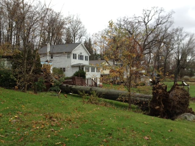 Two young boys were killed in North Salem when this tree fell on a Bonnieview Street house during Hurricane Sandy.