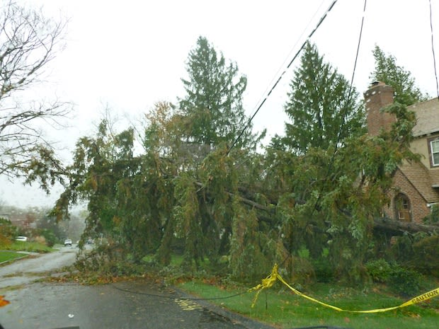 Greenburgh police received multiple reports of trees landing on houses and cars during Hurricane Sandy.