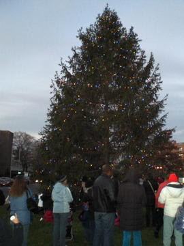 Greenwich will lights its Christmas tree on Friday afternoon.