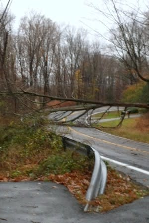 A tree knocked down by Hurricane Sandy blocks Route 124.