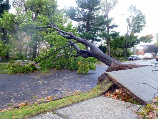 Yonkers officials have issued an RFP for professional tree services after Superstorm Sandy added to a backlog of more than 2,000 requests.