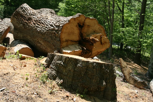 A tree was cut down without a permit in the Greenbriar section of Somers.