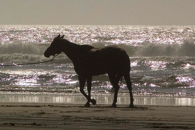 Horses have been allowed on Fairfield's beaches during the off-season since 2008.