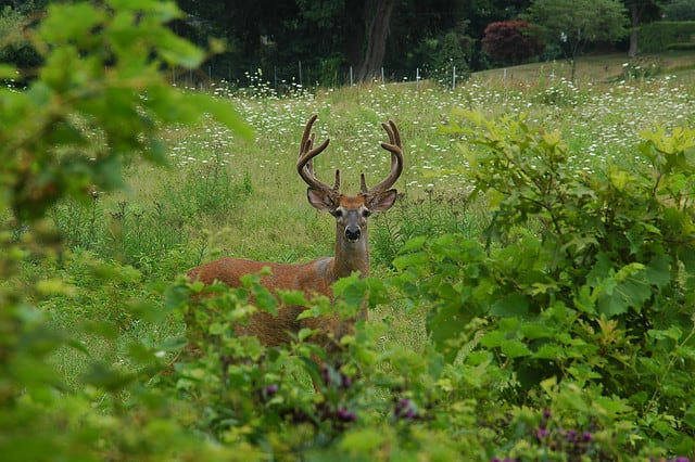 Westchester County bow hunters can begin taking proficiency tests for deer hunting this fall on June 21. Bow hunting will return to some county parks this October.