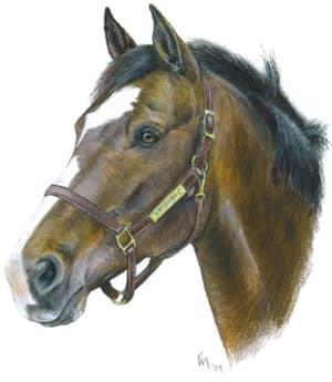 A horse portrait by Fran Megerdichian, one of the artists whose work is on view this month at Pace University's Choate Art Gallery.