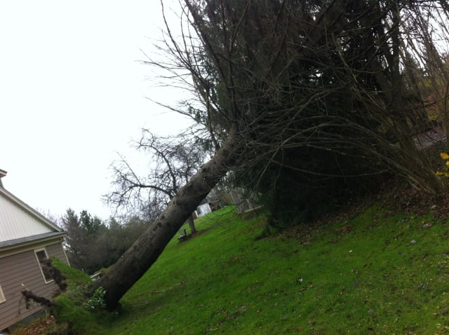 High winds on Friday could knock down trees or power lines.