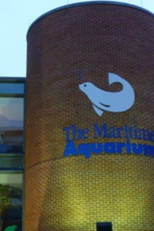 The Maritime Aquarium at Norwalk is offering special children's programs during the school break.
