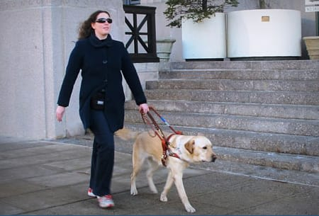 Lions Club members from around the country have helped raise $300,000 for Yorktown's Guiding Eyes for the Blind.