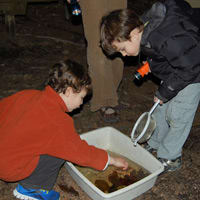 The Stamford Museum & Nature Center will host a nighttime amphibian amble on Friday, April 11.