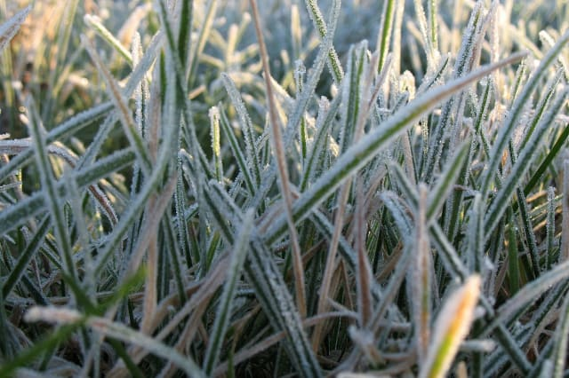 Frost reportedly could affect plants and crops in Westchester for a third straight night.