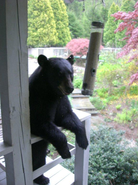 Bear encounters are becoming more and more common in Westchester County. This one makes itself right at home.