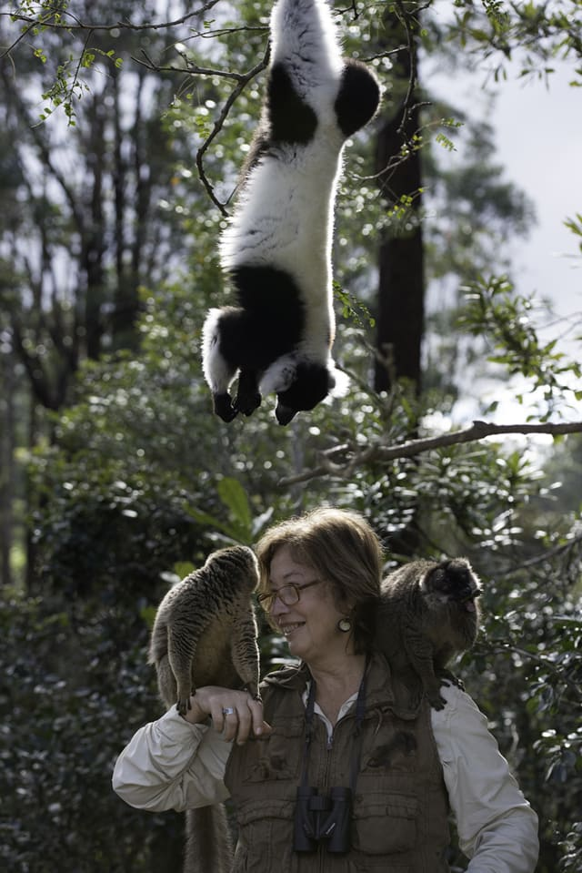 """Dr. Patricia Wright, the scientist featured in the IMAX movie """"Island of Lemurs: Madagascar"""" showing at The Martime Aquarium at Norwalk, has won the 2014 Indianapolis Prize, an award for animal conservation."""