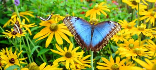 Greenburgh Nature Center will be hosting its fifth annual live butterfly exhibit beginning Saturday, June 28.