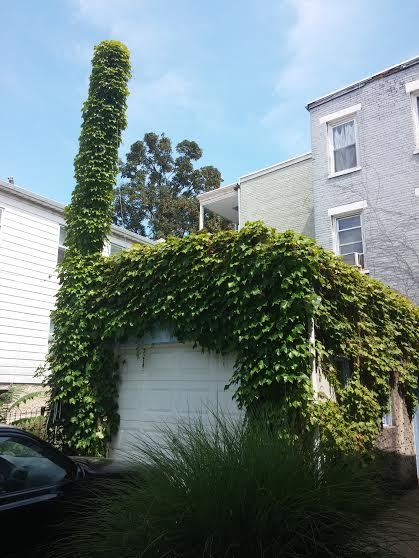 This giant vine chair is located at a home in Hastings-on-Hudson. Have you seen it?