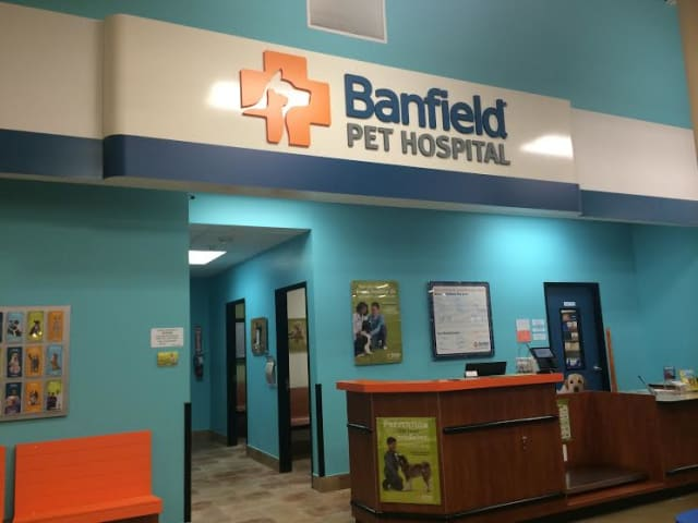 The new veterinary Banfield Pet Hospital opens in Greenburgh/White Plains Saturday, Aug. 21.