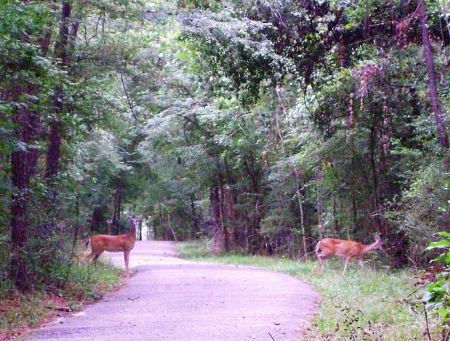 Ubiquitous in the fall -- and difficult to spot on the road -- deer are on the run during their mating season, which happens from now through December.
