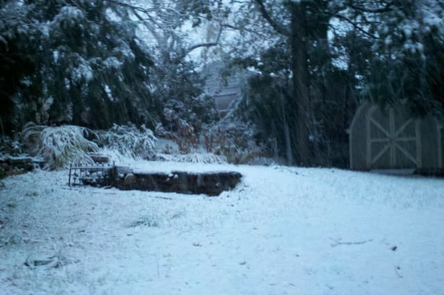 The backyard of a Greenwich Daily Voice reader was left with a coat of new-fallen snow Thursday.