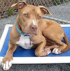 Chopper, the Putnam Humane Society's pet of the week, is looking for a forever home.