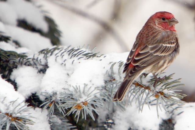 Visit Somers' Muscoot Farm Sunday and learn which birds fly south for the winter and which ones stay in the North.