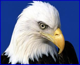 Teatown's EagleFest 2013 has been rescheduled for 9 a.m. to 4 p.m., Sunday, Feb. 10.