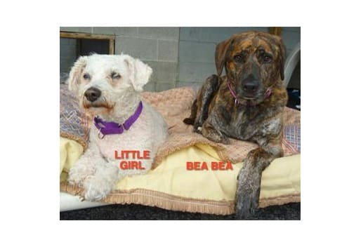 Little Girl and Bea Bea are among the many adoptable pets available at the Putnam Humane Society in Carmel.
