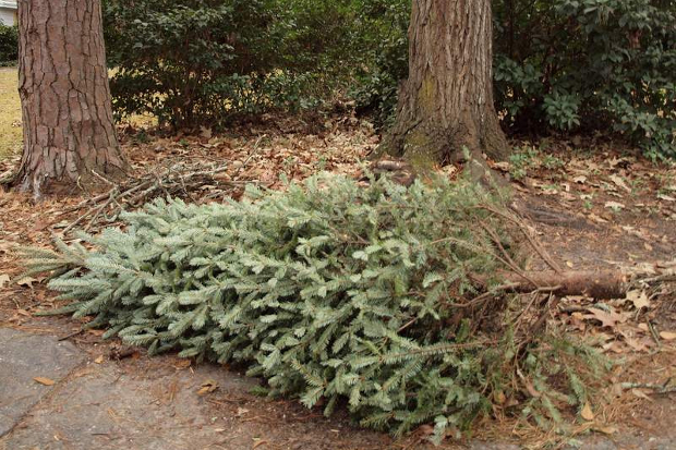 The City of Norwalk is set to collect Christmas trees starting Monday, Jan. 6.