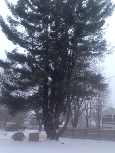 Very fine white snow covers the ground and swirls in the frigied air on Friday morning in Danbury.