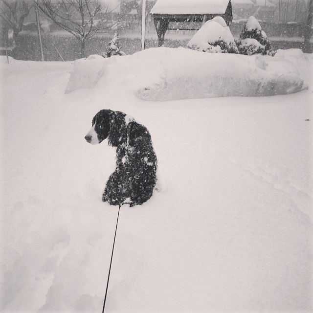 Jasper Smith of Larchmont is over the snow, to say the least.