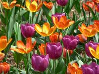 The Bartlett Arboretum will host a plant sale on Saturday, May 10.