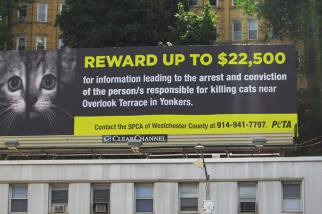 Animal Defenders of Westchester has announced that the city of Yonkers has allotted $15,000 to trap, neuter and release feral cats after the worst case of animal cruelty occurred in Yonkers.