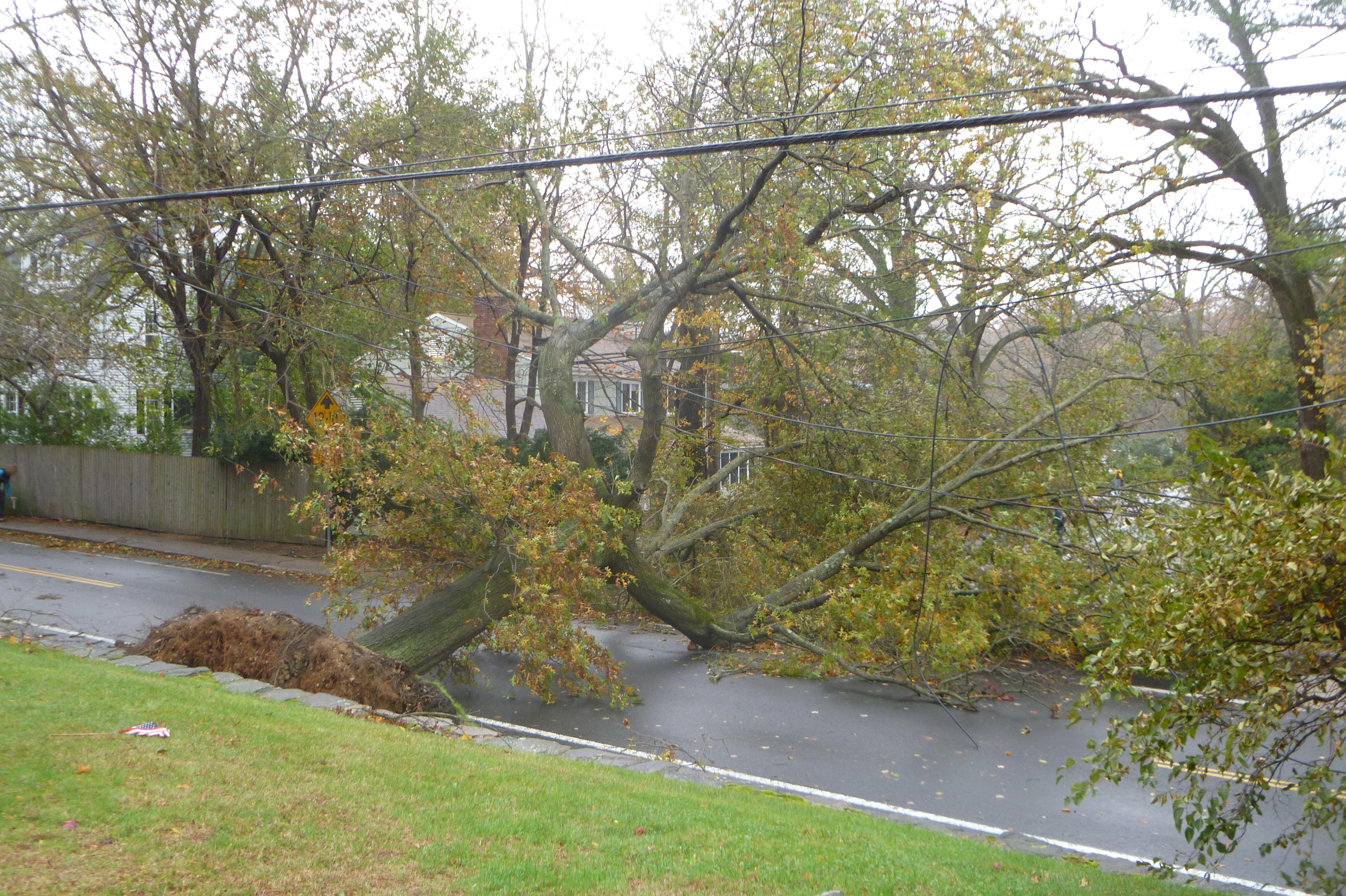 This fallen tree was blocking Sound Shore Rd. on Tuesday.