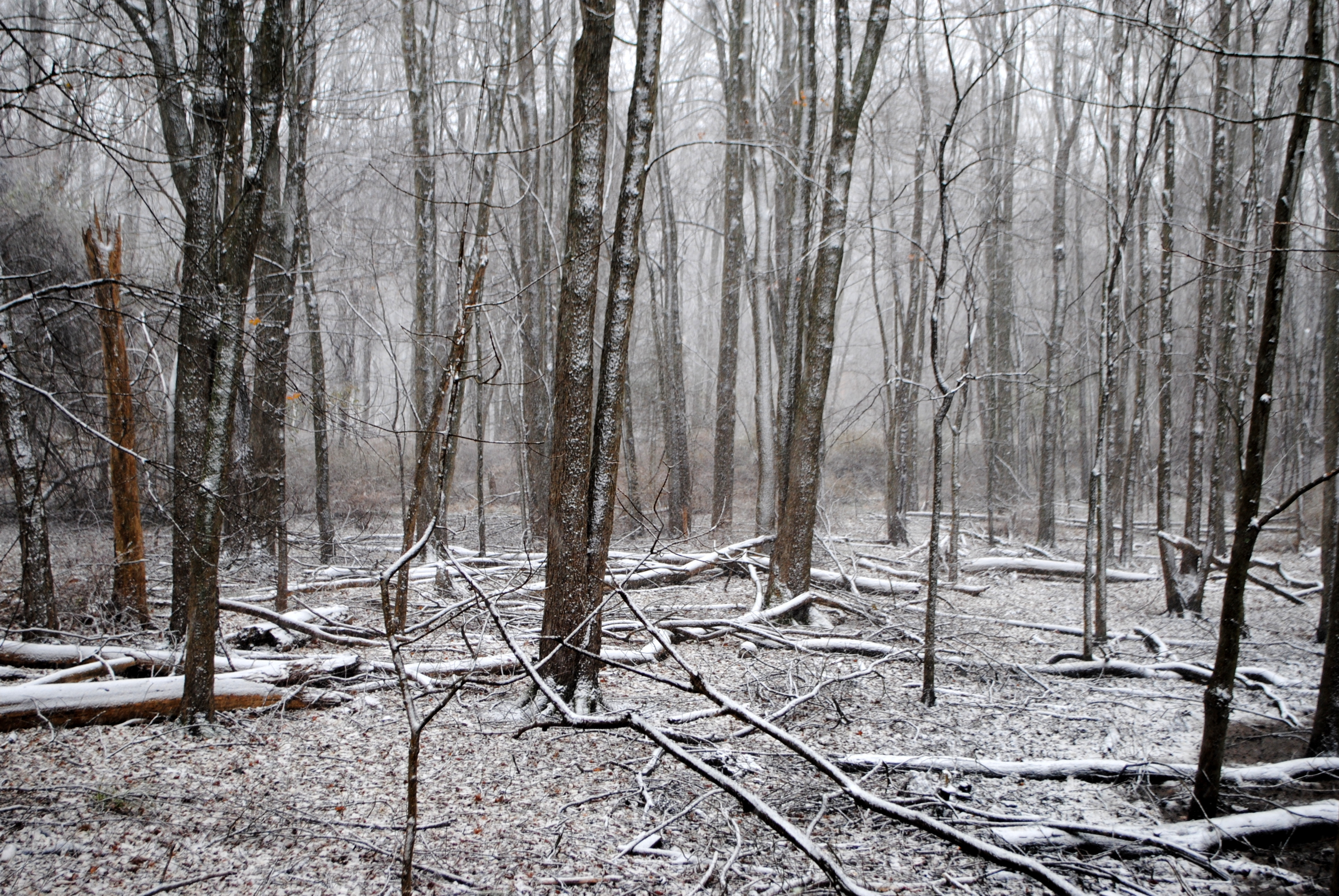 Ten days after Hurricane Sandy hit Cortlandt, snow began falling on downed trees in the woods off Maple Avenue.