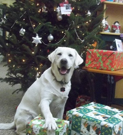 Santo -- a rescued dog -- is among the beneficiaries of Best Friends Pet Care's annual holiday drive.