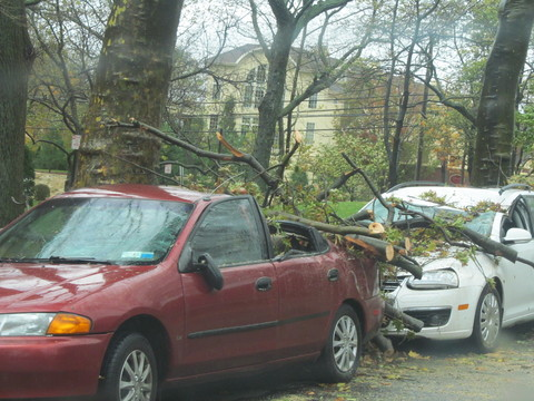Downed tree branches sit on a car in New Rochelle following Hurricane Sandy