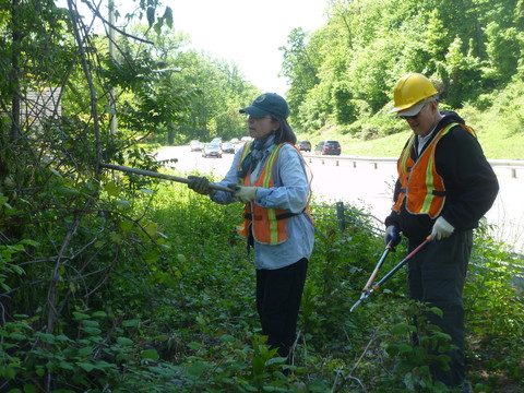MJ Wilson, left, works to cut away vines wrapped around trees along the Saw Mill River Parkway last year. A similar event this weekend is just one of the things happening in and around Yonkers.