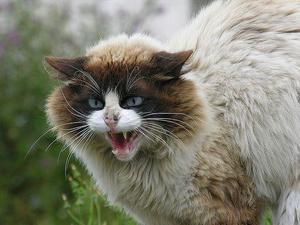 Как успокоить кота чтобы он не орал