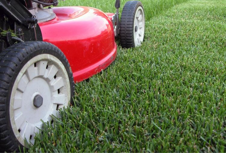 fresh-cut-lawn