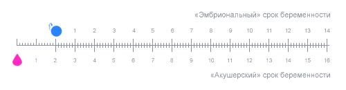 Калькулятор вагітності по тижнях