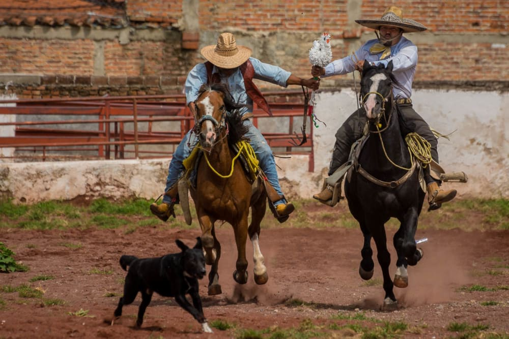 "Events at the bullring during the Día del Charro include the game of ""chicken."" Two cowboys on horses start off standing still, both clutching a baton dressed up as a chicken."