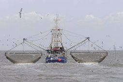 Baltic fish