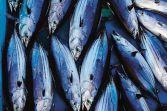 tuna sustainability