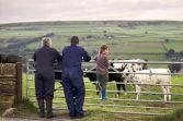 Brexit farmers