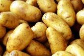 French potato production