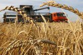 wheat supplier